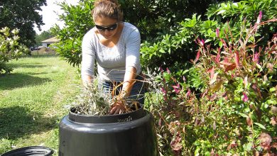 Photo of Home Composting – Top 5 Reasons to Compost Your Kitchen Food Waste